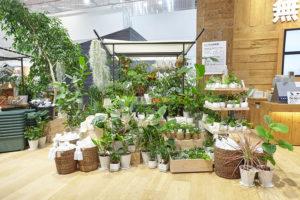 Ristrutturazione Muji a Tokyo, la vendita piante